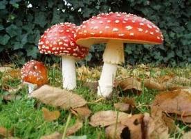 Ngộ độc nấm - cách hỗ trợ điều trị, sơ cứu, cấp cứu