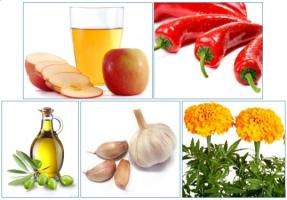 Bài thuốc chữa khỏi viêm tắc tĩnh mạch chân bằng những thực phẩm sẵn có tại nhà